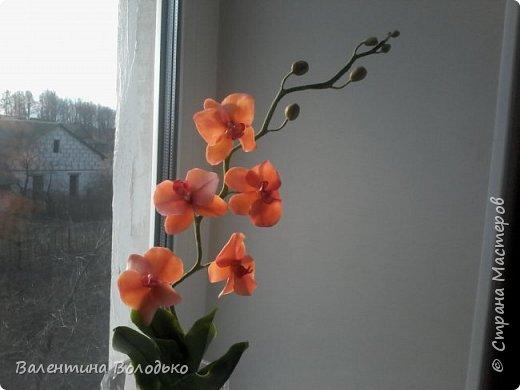 Здравствуйте дороги мастера и мастерицы!!!Смотрите мои новые работы.Первый раз лепила орхидейку.Листочки не получились,ну а веточку прошу оценить. фото 1