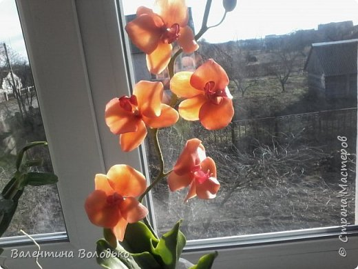 Здравствуйте дороги мастера и мастерицы!!!Смотрите мои новые работы.Первый раз лепила орхидейку.Листочки не получились,ну а веточку прошу оценить. фото 6