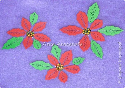 Продолжаю вырезать к празднику. Сегодня у меня Пуансетия, красивый рождественский цветок. Все цветочки я как обычно заклеила в прозрачную пленку (заламинировала), так что их и на елочку можно повесить и просто украсить дом ...   фото 1