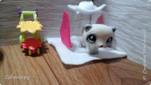 Привет меня зовут Вася а моих животных Лапка Сакура и Линда фото 5