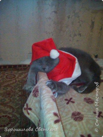 Вот такой костюмчик сделала своему коту Касперу для новогодней фотосессии. фото 3