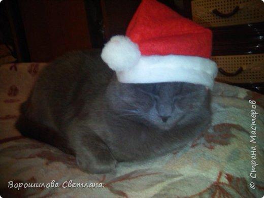 Вот такой костюмчик сделала своему коту Касперу для новогодней фотосессии. фото 5