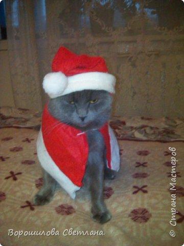 Вот такой костюмчик сделала своему коту Касперу для новогодней фотосессии. фото 9