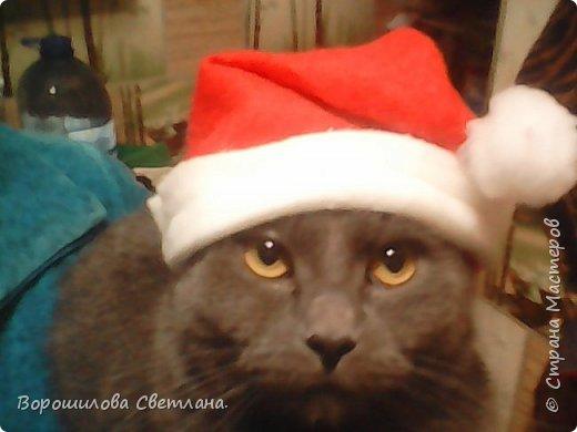 Вот такой костюмчик сделала своему коту Касперу для новогодней фотосессии. фото 10