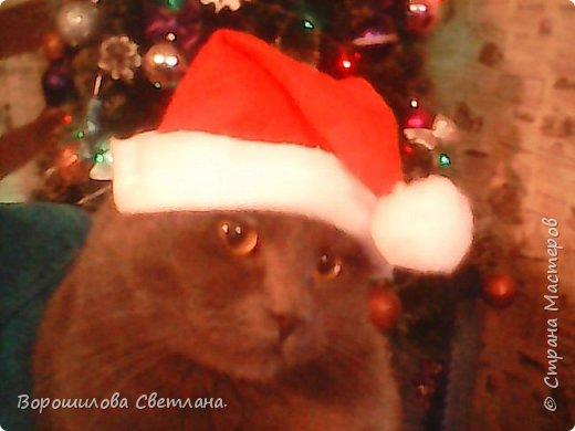 Вот такой костюмчик сделала своему коту Касперу для новогодней фотосессии. фото 11