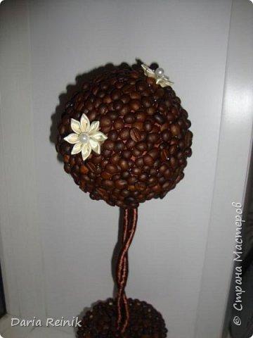 Кофейное дерево для свекрови на Новый год,она обожает кофе. фото 1