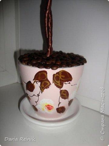 Кофейное дерево для свекрови на Новый год,она обожает кофе. фото 4