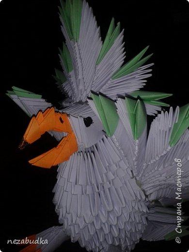 попугай птичка певчая))) фото 4