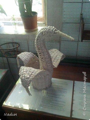 Мои лебеди фото 5