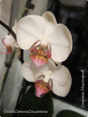 Вот таким пышным и одновременным цветением порадовали меня мои красотки!  фото 9