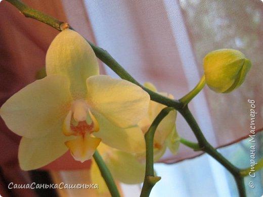 Вот таким пышным и одновременным цветением порадовали меня мои красотки!  фото 8