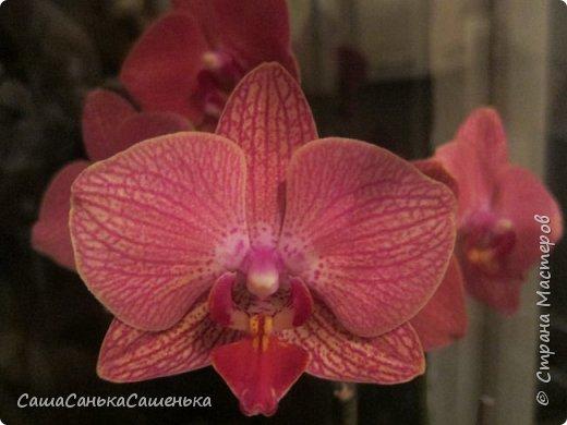 Вот таким пышным и одновременным цветением порадовали меня мои красотки!  фото 11