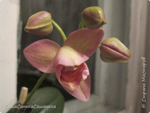 Вот таким пышным и одновременным цветением порадовали меня мои красотки!  фото 6