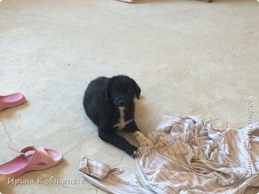 Это Малыш! А потому Малыш, что два мои другие пса - Макс и Мишка( о которых я делала репортаж ещё раньше) - уже взрослые трёхлетние собаки. фото 7