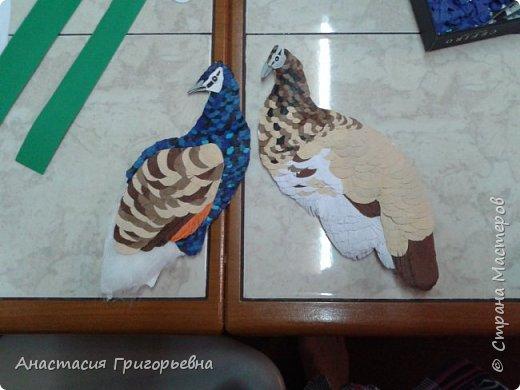 Два павлина  фото 7