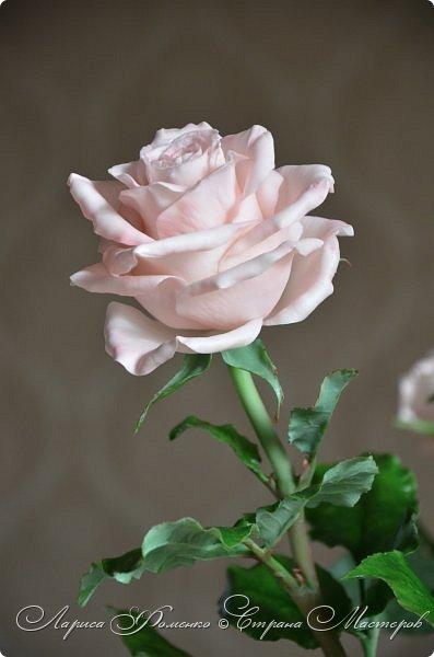 Добрый день всем ! Букет из пяти розовых роз. Сделан на заказ. Фотографий много, при разном освещении. Приятного просмотра. фото 10