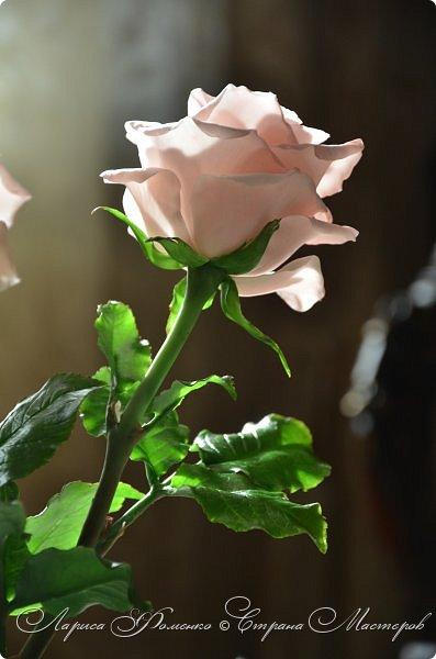 Добрый день всем ! Букет из пяти розовых роз. Сделан на заказ. Фотографий много, при разном освещении. Приятного просмотра. фото 11