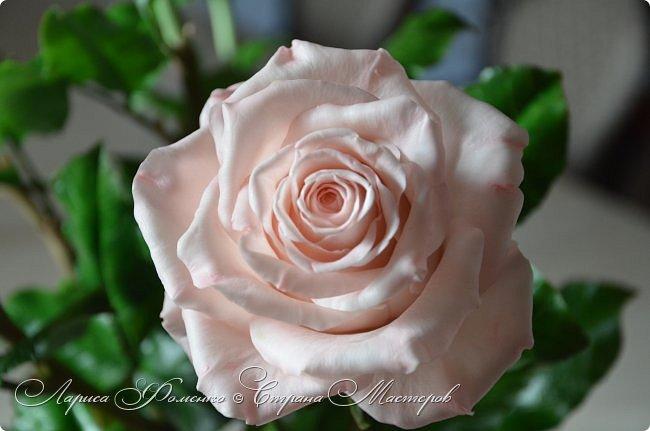 Добрый день всем ! Букет из пяти розовых роз. Сделан на заказ. Фотографий много, при разном освещении. Приятного просмотра. фото 12
