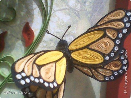 Jardim de borboletas фото 3