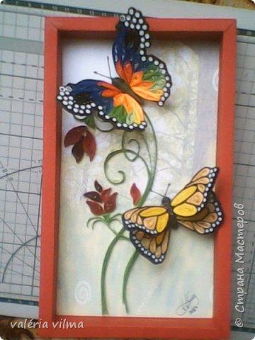 Jardim de borboletas фото 1