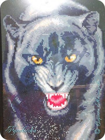 Добрый вечер Страна Мастеров! Я хочу показать вам вот такую пантеру в технике алмазная мозаика. фото 1