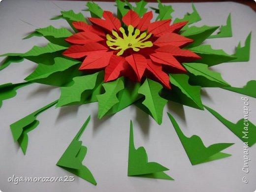 Рождественская звезда фото 2