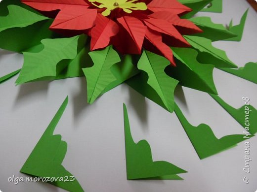 Рождественская звезда фото 3