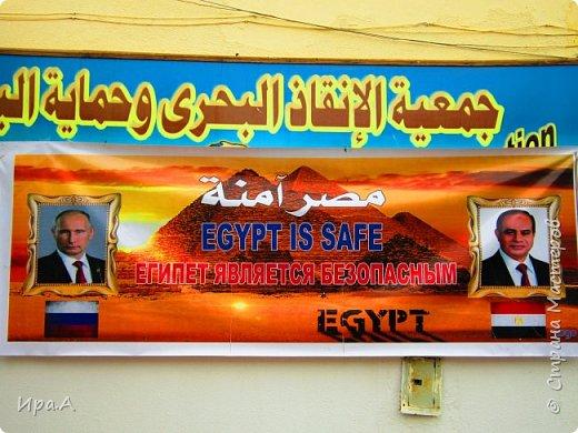 Хочу в этом маленьком репортаже показать нашу египетскую новогоднюю атмосферу. Многим кажется, что какая же новогодняя атмосфера без снега? Ан-нет, египтяне многому научились за последние годы у европейцев, и при этом, конечно, вносят и что-то свое, чисто по-египетски. Вот эта шикарная, на мой взгляд, ёлка была создана из горшков с пуансеттиями в одном из отелей района Макади (недалеко от Хургады). Большая часть состоит из горшков, поставленных в виде ступенчатого конуса, а внизу - ряд белых пуансеттий. фото 10