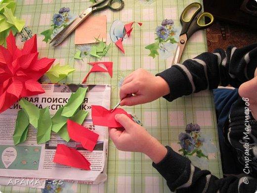 Здравствуйте!!! Вот готова и наша Рождественская звезда. Когда показала этот цветочек Никите, внуку, не было отбоя, нужно было сразу начать делать. Но... делали мы её три дня. Усидчивость не хватает. Старался, пыхтел, делал, конечно с моей помощью, половина работы точно его. Без него ничего не делала, только вместе, поэтому и долго. Довольный!!! фото 9