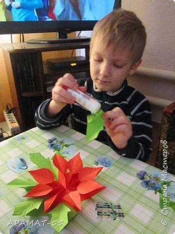 Здравствуйте!!! Вот готова и наша Рождественская звезда. Когда показала этот цветочек Никите, внуку, не было отбоя, нужно было сразу начать делать. Но... делали мы её три дня. Усидчивость не хватает. Старался, пыхтел, делал, конечно с моей помощью, половина работы точно его. Без него ничего не делала, только вместе, поэтому и долго. Довольный!!! фото 10
