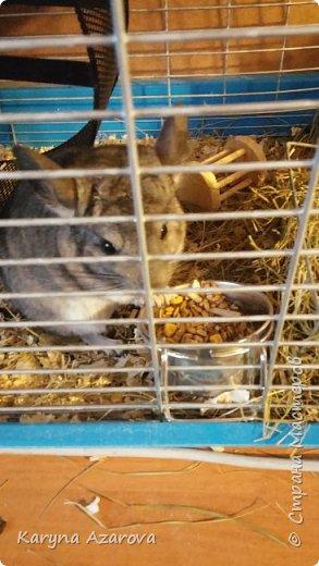 Здравствуйте! Наш Магвайчик(Гизма) вырос, уже совсем большой поэтому показываю. фото 3