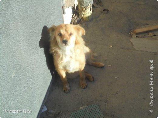 К нам во двор прибежала рыжая собачка! Я её сразу же покормил, сделал ей место для сна! Сейчас она приблудилась к другим собакам в другом дворе! Я очень за неё рад!  фото 2