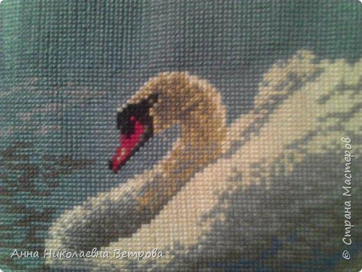 Этого красавца-лебедя я увидела на канве с рисунком в магазине, в который зашла. И не раздумывая сделала покупку. Там же я бодобрала нитки для вышивки. На работу у меня ушло два месяца. Вот что у меня получилось. фото 4