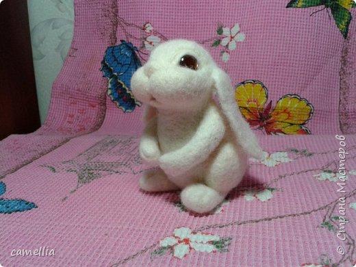 белый кролик фото 2