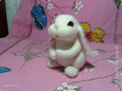 белый кролик фото 5