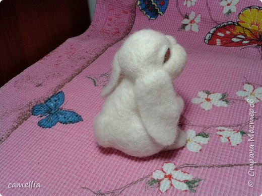 белый кролик фото 4