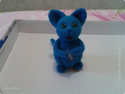 Синий кот фото 1