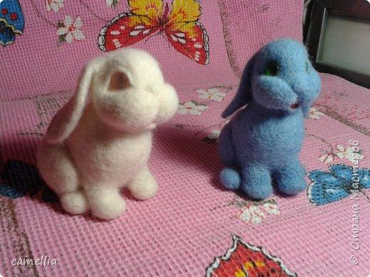 Братцы кролики фото 3