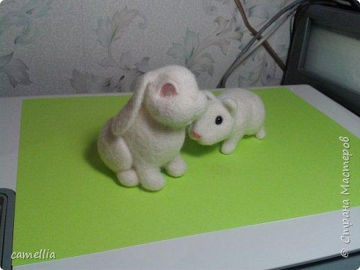 зайка альбинос. фото 3