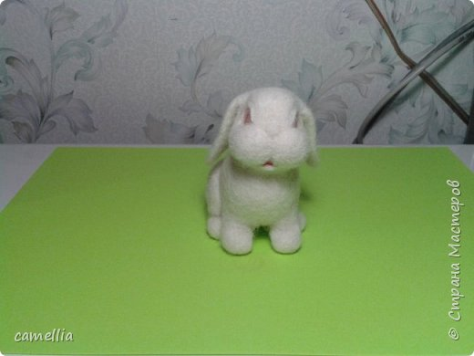 зайка альбинос. фото 5
