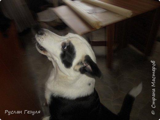 Спешу представить репортаж про моих собак! Фото получилось немного, потому что псы сильно вертятся! Нужно ловить момент, чтобы сделать снимок! Собак зовут Макс (можно Мася) и Миша (можно Мишка)  Макс грызёт вкусную морковку!  фото 5