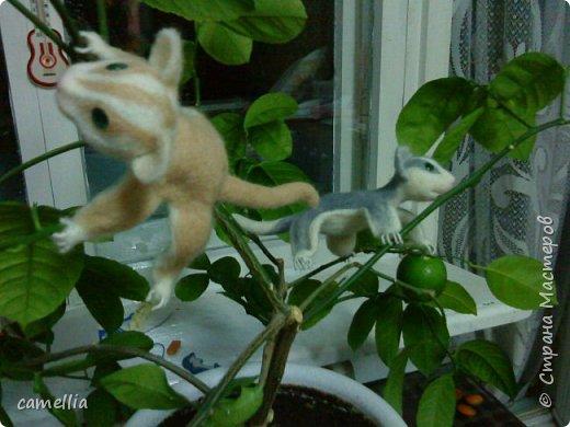 Мои лемурчики летяги фото 7