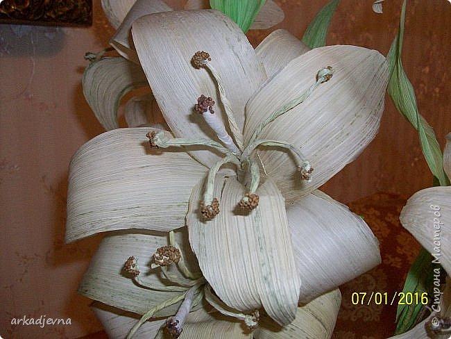 Здравствуйте, Мастера  и Мастерицы!! Поздравляю всех с Рождеством, мира, благополучия, здоровья всем, всем. Вот наконец я сделала одну из своих хотелок. Очень мне нравятся поделки из листьев кукурузы, плетение, цветы, куклы.В этом году заготовила на даче листики и изучив МК сделала цветы.  Лилии будут стоять в моей напольной плетенной вазе, поэтому и размер соответствующий.  Талаш красила пищевыми красителями: розовый, зеленый, и натуральный цвет.  Листики закручивала утюгом и  щипцами для волос. фото 9