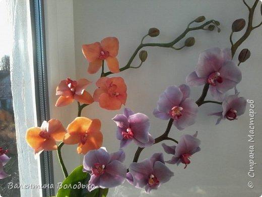 Здравствуйте мастера и мастерицы Страны Мастеров.Сегодня у меня расцвели орхидейки с холодного фарфора. фото 7