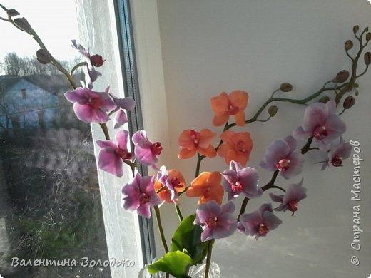 Здравствуйте мастера и мастерицы Страны Мастеров.Сегодня у меня расцвели орхидейки с холодного фарфора. фото 8