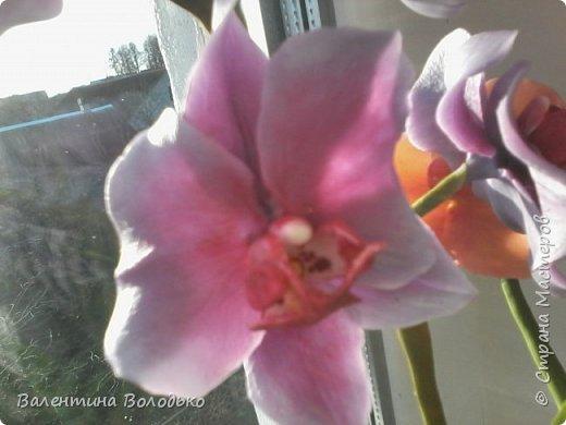 Здравствуйте мастера и мастерицы Страны Мастеров.Сегодня у меня расцвели орхидейки с холодного фарфора. фото 11