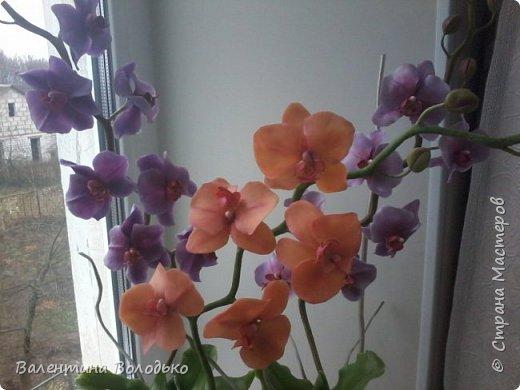 Здравствуйте мастера и мастерицы Страны Мастеров.Сегодня у меня расцвели орхидейки с холодного фарфора. фото 2