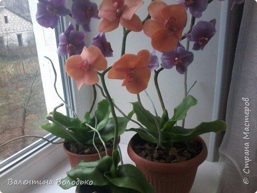 Здравствуйте мастера и мастерицы Страны Мастеров.Сегодня у меня расцвели орхидейки с холодного фарфора. фото 3