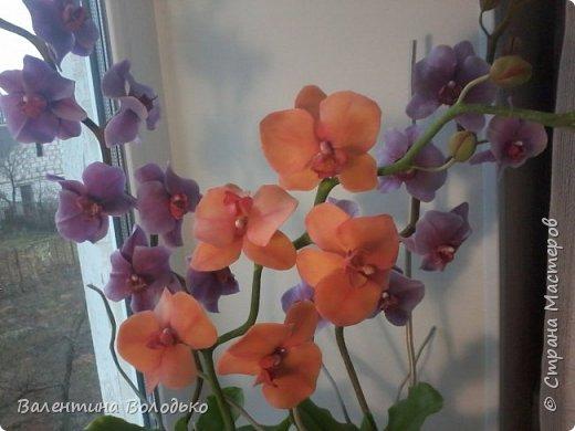 Здравствуйте мастера и мастерицы Страны Мастеров.Сегодня у меня расцвели орхидейки с холодного фарфора. фото 4