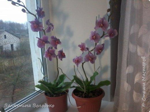 Здравствуйте мастера и мастерицы Страны Мастеров.Сегодня у меня расцвели орхидейки с холодного фарфора. фото 5